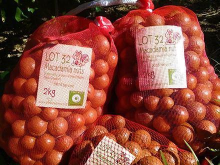 Macadamia Nuts Bagged