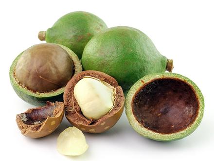 Macadamia Nuts Raw