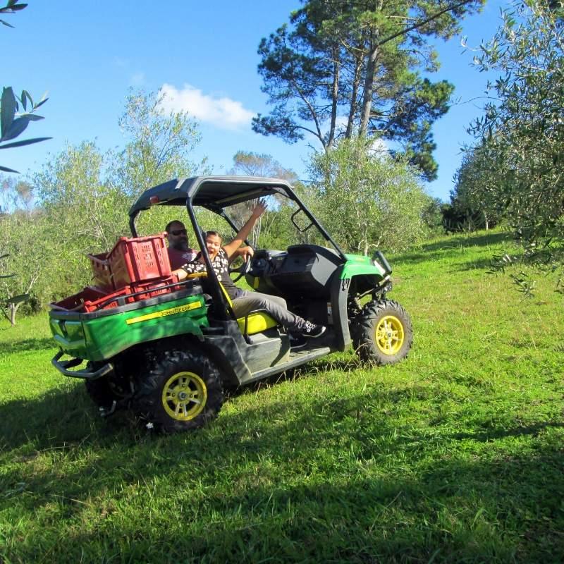 John Deere on the olive grove
